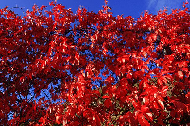 TELOS-Aussen-Aufgang-Herbstlaub-C08408b.jpg