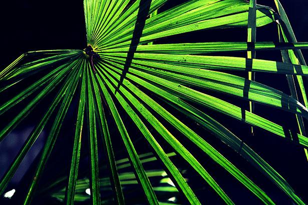 TELOS-Aussen-Garten-Palmen-C07398b.jpg