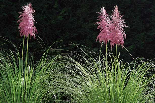 TELOS-Aussen-Garten-Pampasgras-C08247b.jpg