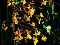Frühlingsboten im Garten