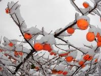 Gartengeschenke im Winter ...