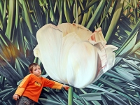 Tulpe im Seminarraum