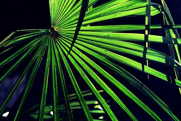 Unter Palmen ...