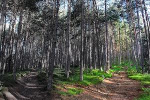 Wald Kreuzung Wegweiser Wegmarkierung 5587bh