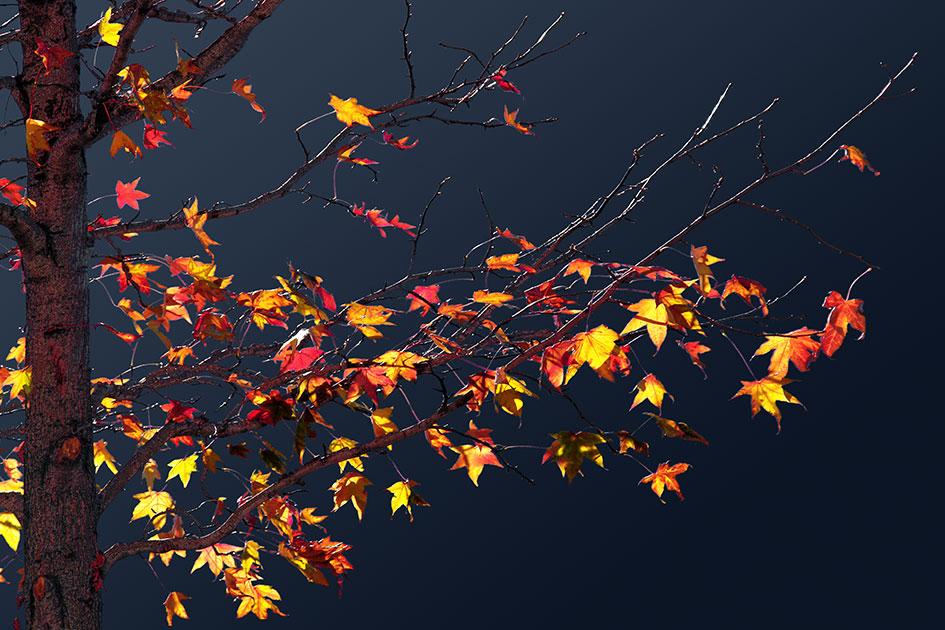 Herbstlaub Blätter fallen Baum B7641e