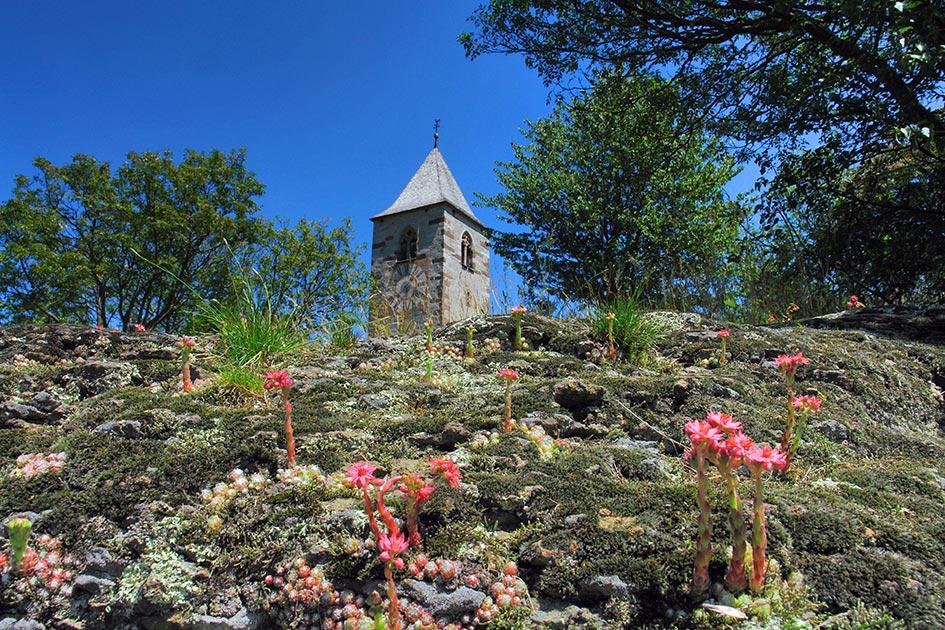 Ritten Lengstein Köstnweg Verenakirchl Turm Blumen Hauswurz genügsam bescheiden Demut C05643c.jpg