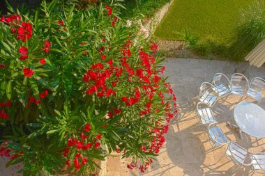 TELOS Außengelände Terrasse Oleander Stühle Tisch D2513b