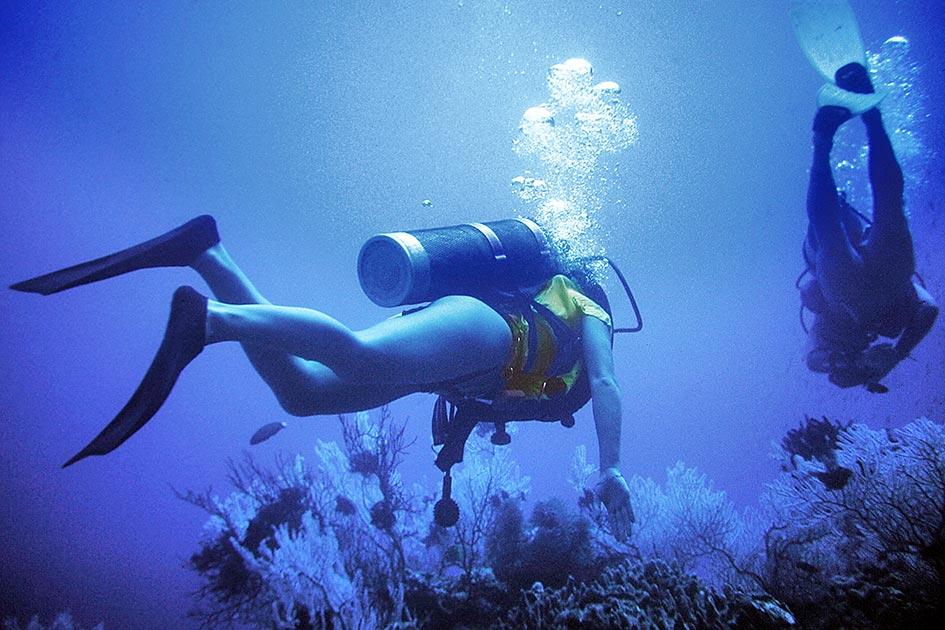 Sommer Meer Tauchen Korallen / Foto: TELOs - dia3107