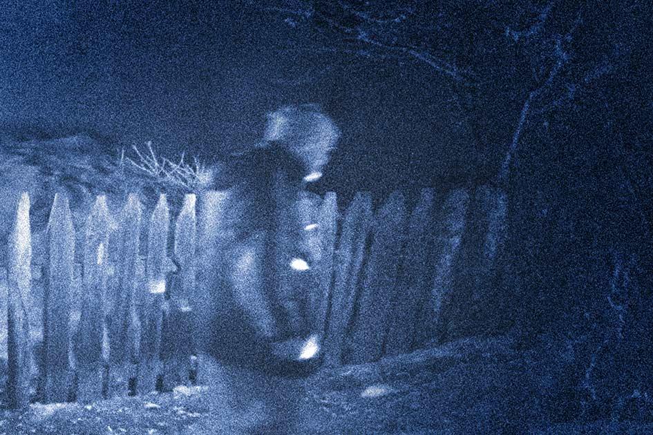 Nacht Wald Mann Dunkelheit / Foto: TELOS - 11587b