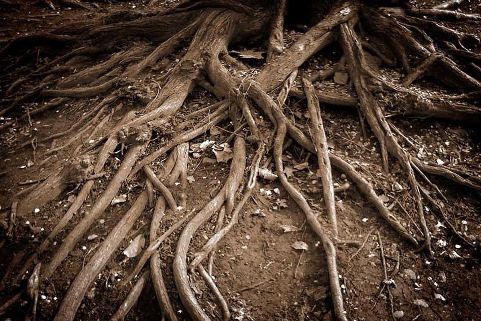 Wurzeln Baum Erde / Foto: TELOS - IMG_0099bv